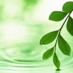 Greener Websites Feature Image